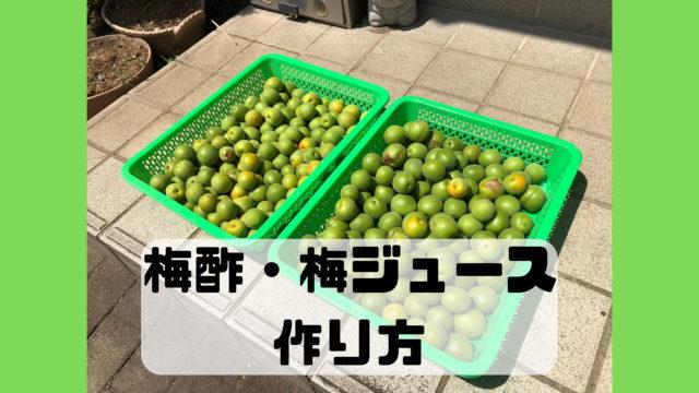 梅酢 梅ジュース 作り方 材料