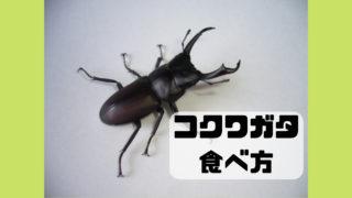 コクワガタ 食べ方 昆虫食