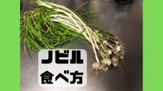 ノビル 食べ方 採取方法 味 レシピ