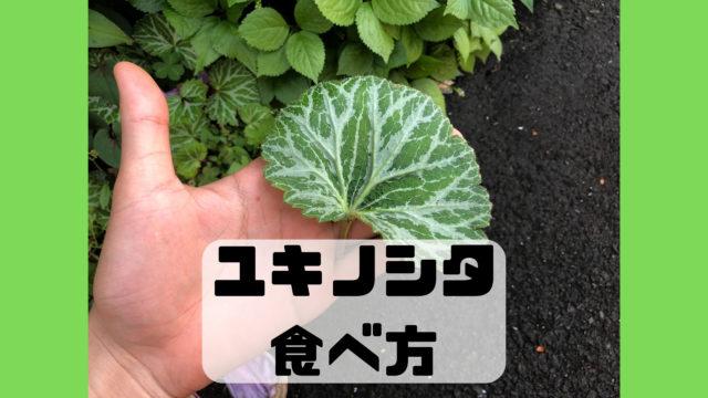 ユキノシタ 食べ方