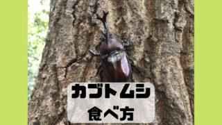 カブトムシ 食べ方 味 調理法 レシピ