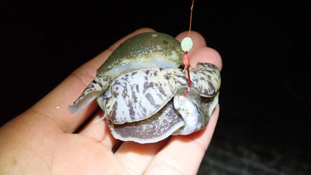 モスソガイ ツブ貝 さばき方 有毒 テトラミン 食べ方 味